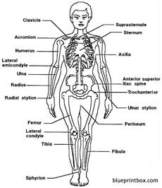 body medical terms 2